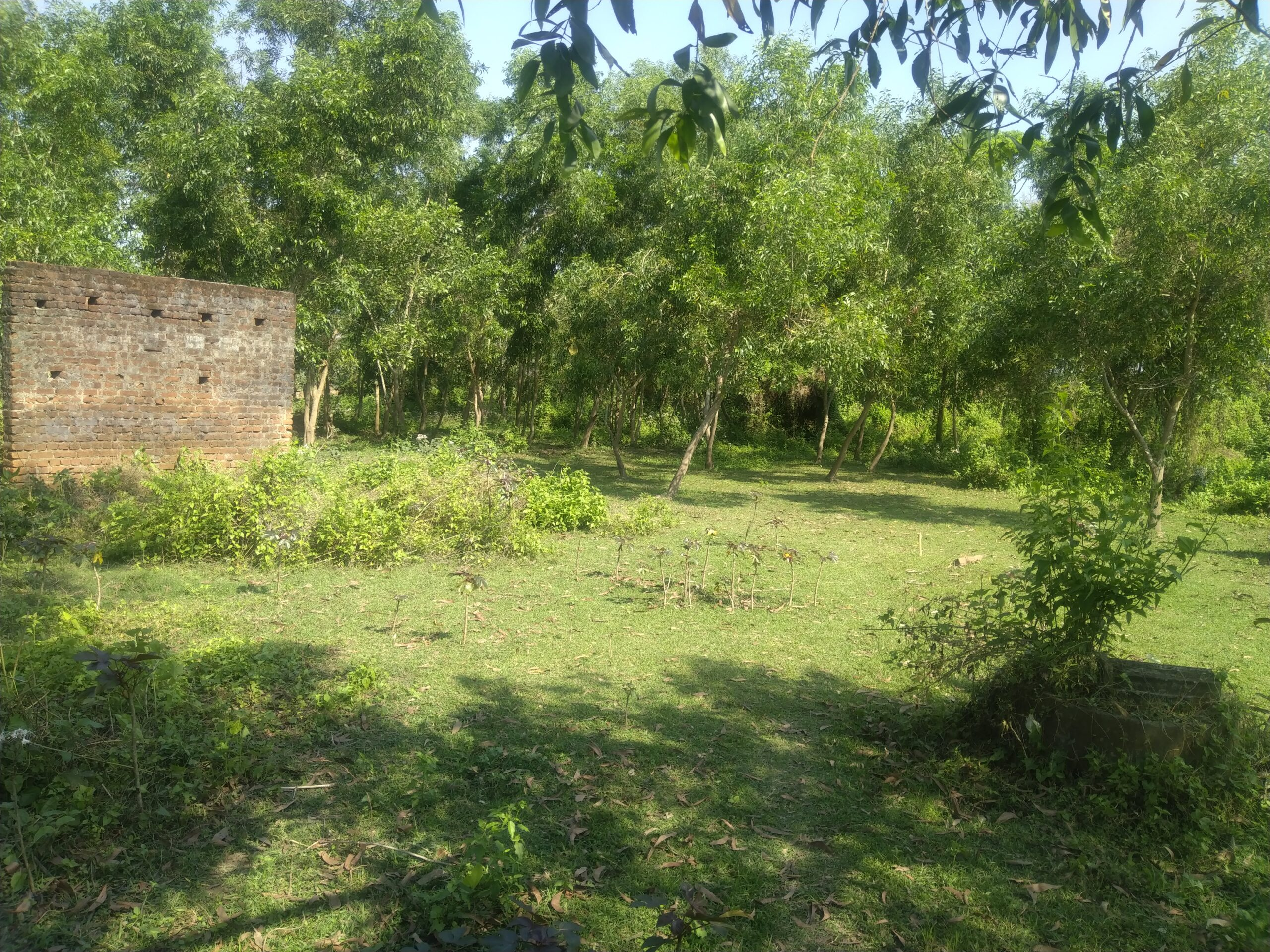 Village Chhoti in Odisha, India